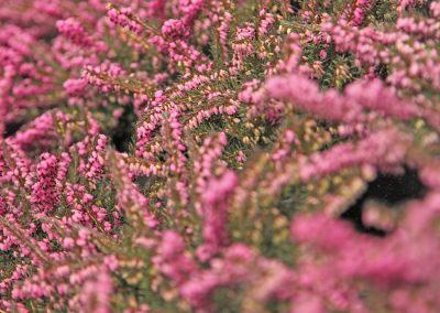 Arrangements Floraux Cheseaux