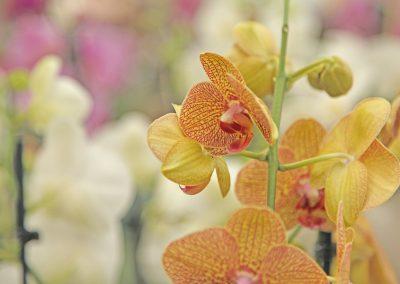 Arrangements Floraux Crissier