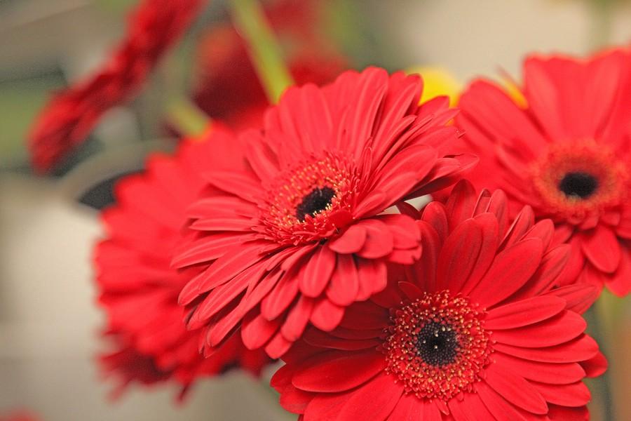 Hammerli fleurs jardinerie et fleuristerie cheseaux confection florale altavistaventures Choice Image