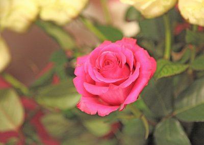 Bouquet Fleurs Lausanne