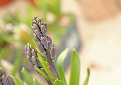 Fleurs Deuil et Enterrement Bussigny