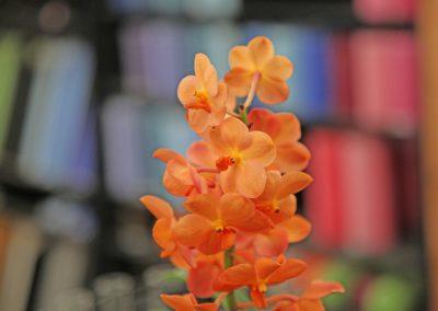 Fleurs Deuil et Enterrement Crissier
