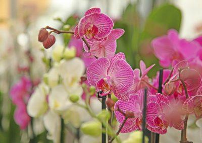 Fleurs Mariage Crissier