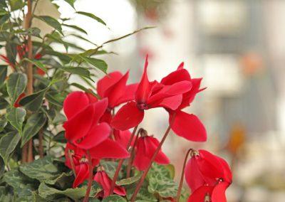 Fleurs Mariage Lausanne