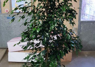 bouquets fleurs arrangements location plantes boutiques entreprise lausanne bussigny crissier