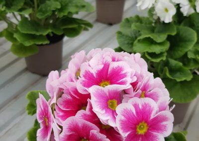2creation bouquets arrangement floraux printemps lausanne