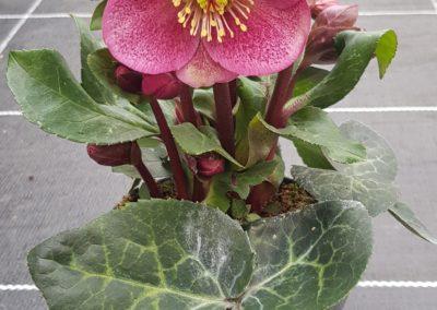 creation bouquets hiver lausanne